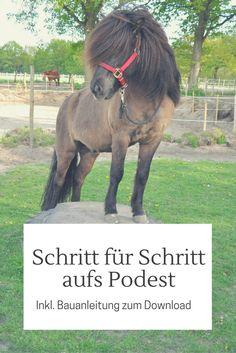 Schritt für Schritt aufs Podest - Podesttraining für Pferde
