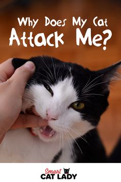 We all love petting our cats and showering them with love. So why do our cats repay us with an unexpected nibble after a play session or brushing goes south? Is there such a thing as giving too much affection? Cat Care Tips, Pet Care, Pet Tips, Diy Cat Scratching Post, Cat Biting, How To Cat, Cat Attack, Cat Behavior, Cat Facts