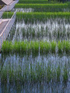 Galería de Parque Houtan en Shanghai / Turenscape - 16