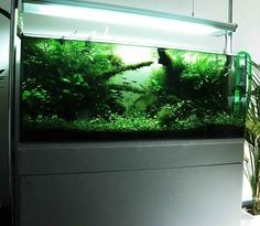 Layout by Florianf. #aquascaping www.aquaplanet.co.il