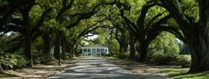 Avenue of the Oaks, Spring Hill College