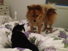 Dog and cat trying to be friends...