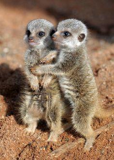 Funny Wildlife, Cute Galore!! ...
