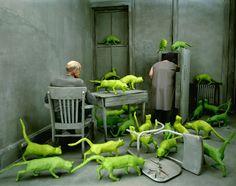Sandy Skoglund, Radioactive Cats, 1980  Cibachrome print, 30 X 40 in