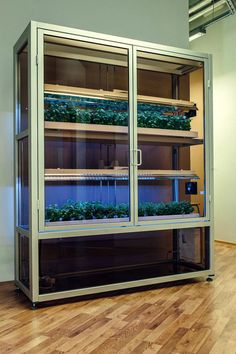 This Indoor Farm Can Bring Fresh Produce to Food Deserts | WIRED Indoor Farming, Hydroponic Farming, Hydroponics System, Aquaponics, Permaculture, Herb Garden In Kitchen, Veg Garden, Vertical Garden Design, Vertical Farming