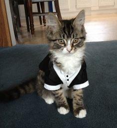 Custom Cat/  Dog Wedding Tuxedos by GypsyEyesClothing on Etsy... Polly and April?
