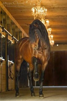 My stable will have chandeliers...