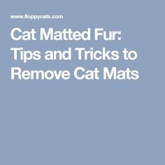 Cat Matted Fur: Tips and Tricks to Remove Cat Mats
