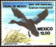 Mexico 1984 - Pato Real Mexicano