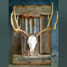 Just finished this special order mount. He gave us the sheds and this is what he's getting back. Deer Skull Decor, Painted Deer Skulls, Deer Hunting Decor, Deer Head Decor, Deer Antler Decorations, Antler Art, Antler Mount, Deer Mount Decor, Deer Mounts