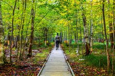 Essential Weekend Guide to Acadia National Park and Bar Harbor Maine » Carry-On Traveler Acadia National Park, National Parks, Bar Harbor Inn, English Tudor, New England Style, Cozy Place, Green Grass, Railroad Tracks, Acre