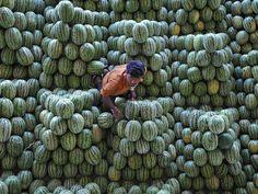An Indian laborer separates watermelon at the Gaddiannaram fruit market in Hyderabad.