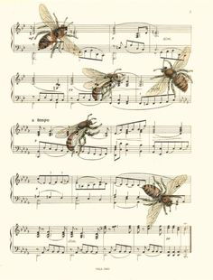 "a classic ~ Theb""Flight of the Bumblebee"" is an orchestral interlude written by Nikolai Rimsky-Korsakov for his opera The Tale of Tsar Saltan, composed in 1899–1900. The piece closes Act III, Tableau 1, during which the magic Swan-Bird changes Prince Gvidon Saltanovich (the Tsar's son) into an insect so that he can fly away to visit his father (who does not know that he is alive)."