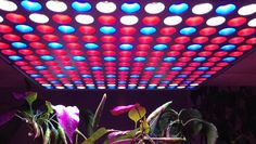 Test Lampe Panneau LED de croissance pour culture hydroponique intérieur...