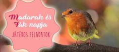 Madarak és fák napja - játékos feladatok, melyek bővítik gyermeked tudását Plastic Spoons, Green Day, Bird Feeders, Kids Learning, Videos, Techno, Birds, Outdoor Decor, Projects