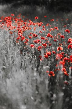 Red Sprinkle--Black and White photo highlighted in one place with color--(by Signefotar on BoredPanda)
