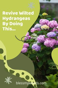 Don't let your beloved hydrangeas look sad and wilted. There are a few steps you can take if such a tragedy should occur that will revitalize them and fast. Keep reading for more information. #garden #blessmyweedsblog #hydrangeas #flowers Big Flowers, Fall Flowers, Purple Flowers, Beautiful Flowers, Hydrangea Care, Hydrangeas, Gutter Garden, Replant, Organic Gardening Tips
