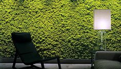 #Exterior #Interior #Jardín #Diseño #Verde #Muro #Recubrimiento #Deck #Pasto