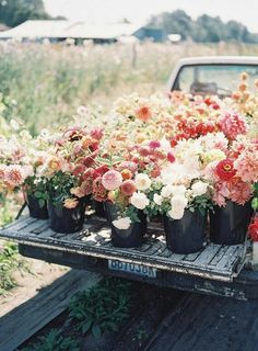 Truckload of spring colored flowers: Ivory, peach, pink, and orange florals for wedding bouquet Spring Flowers, Wild Flowers, Dahlia Flowers, Field Of Flowers, Blush Flowers, Spring Blooms, Flower Bouquets, Blooming Flowers, Flowers Nature
