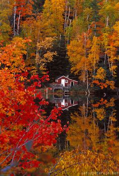 Maples in fall color surround a cabin on the Dead River near Marquette, Michigan in autumn -- photo: Aaron Peterson