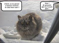 Pauvre chat...