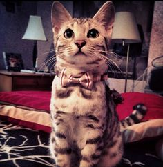Dapper Looking Cat