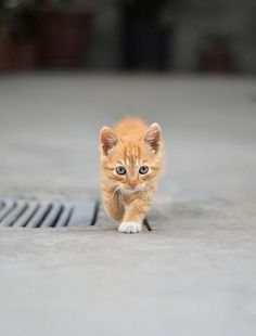Love the yellow kitties.