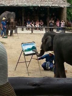 ปางช้างแม่สา (Maesa Elephant Camp) in Mae Rim, เชียงใหม่