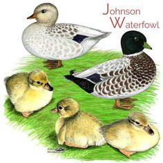 Snow Call Ducks and Ducklings Snowy Silver