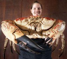 O maior caranguejo do mundo