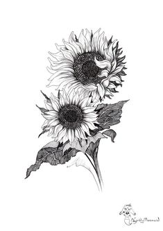 Flower Drawing Discover Sunflowers by CandyMermaid on DeviantArt Sunflowers by CandyMermaid Sunflower Sketches, Sunflower Drawing, Sunflower Art, Sunflower Tattoo Shoulder, Sunflower Tattoos, Sunflower Tattoo Design, Sunflower Tattoo Sleeve, Flower Sleeve, Art Drawings Sketches