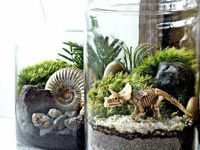 17 Best images about Terrarium on Pinterest   Dinosaurs, Dinosaur party and Fossils