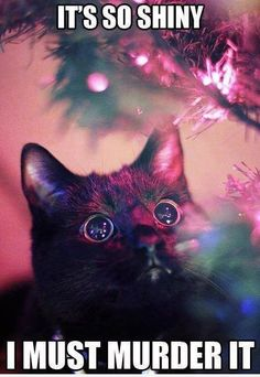 I must murder it | Cat Meme. This is my cat Chandler at christmas time.