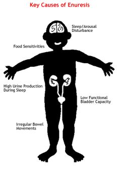 key causes of enuresis