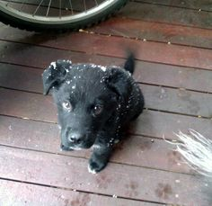 Lab Pup's Dandruff Problem Turned Out to Just Be Snow
