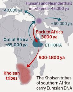 Humanity's forgotten return to Africa revealed in DNA. Call it humanity's unexpected U-turn. One of the biggest events in the history of our species is the exodus out of Africa some 65,000 years ago, the start of Homo sapiens' long march across the world. Now a study of southern African genes shows that, unexpectedly, another migration took western Eurasian DNA back to the very southern tip of the continent 3000 years ago.