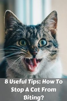 8 Useful Tips: How To Stop A Cat From Biting? Does your cat love to bite often? Whenever you sit near her, you might have seen your kitty's tendency to. Cat Biting, Cat Love, Kids Learning, Cuddling, Helpful Hints, Kittens, Told You So, Pets, Animals