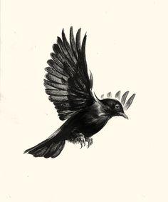 Simple Black Bird Drawing Blackbird of harkers drop by
