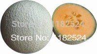 India Tamanna F1 Sweet Melon Seeds fruit seeds (30 SEEDS)