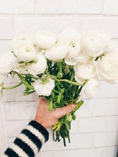 Ranunculus flowers @shirleymarie