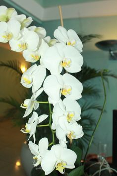 Orchids to welcome you to the lobby at #couplestowerisle
