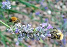 Beekeepers' fears over low honey crop. #environment #bees