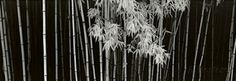 Bamboo, China Poster by Helmut Hirler at AllPosters.com