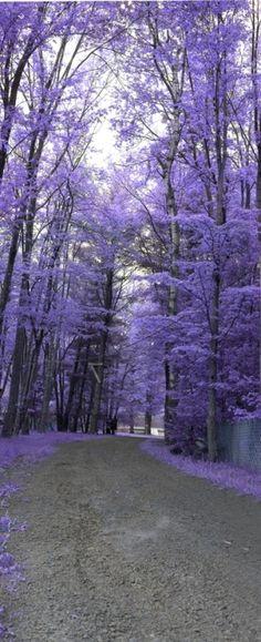 Purple path by wyc