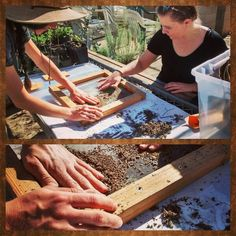 Volunteers cleaning seed at the Back to Natives nursery!