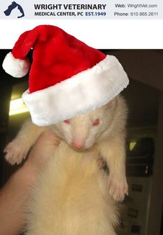 Santa Claws! #Wrightvet #Thevetapp #petpix