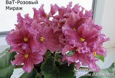 ВаТ-Розовый мираж
