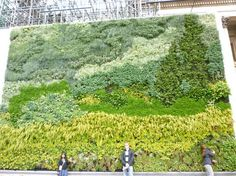 National art gallery – Trafalgar square, London. The wall was designed by ANS to bring A Wheatfield, with Cypresses, one of Van Gogh's famous paintings, depicted in plants. 640 modules were grown, using over 8000 plants
