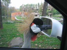 Foto | Vanità al Parco Natura Viva  #GardaConcierge