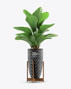 Plant in the Pot Mockup Green Plants, Potted Plants, Herb Pots, Flower Pots, Flowers, Box Mockup, Growing Herbs, Creative Words, Packaging Design